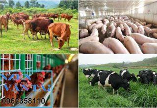 Vận chuyển thức ăn chăn nuôi đi Phú Thọ